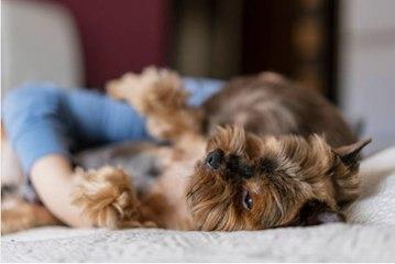 Les meilleures raison de pourquoi il faut sauver un chien d'une association