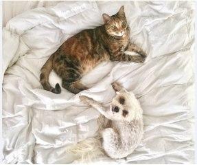 Caresser son animal de compagnie aident a réduire le stress
