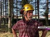 La Fouillouse : Un débardage au cheval pour entretenir les arbres - Reportage TL7 - TL7, Télévision loire 7