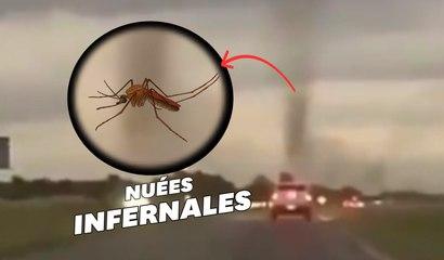 Des tornades de moustiques apparaissent en Argentine