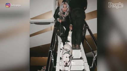 Lady Gaga's Dog Walker Shot, 2 French Bulldogs Stolen