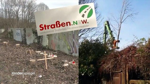 Hammer der Woche – Landesbetrieb holzt Straßenbäume weg