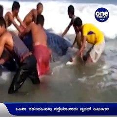 ಒಡಿಶಾ ಕಡಲತಡಿಯಲ್ಲಿ ಪತ್ತೆಯಾಯಿತು ಬೃಹತ್ ನೀಲಿ ತಿಮಿಂಗಿಲ..! | Oneindia Kannada