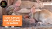 Astuces : Tout savoir sur l'élevage de lapins