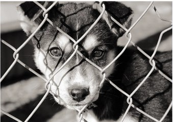 Why Rescue Dogs Make the Best Pets?