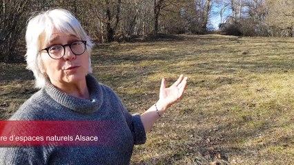 Sondersdorf : nettoyage de printemps pour le site du Muehlengrund