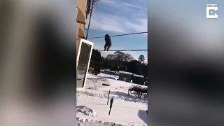 Ces singes frileux ont trouvé le moyen de ne pas toucher la neige au japon