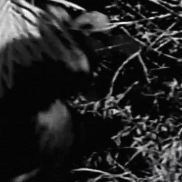 Sheena - Season 1 - Episode 10 - Ganyika Kid    Irish McCalla, Christian Drake, Neal the Chimp
