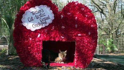 Purr-fect Valentine's Day With Big Cats