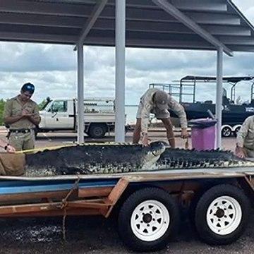 Cranky crocodile caught in Darwin Harbour