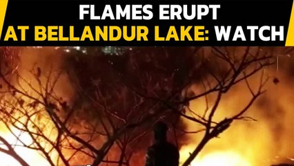 Bengaluru: Fire breaks out at Bellandur lake, fire personnel rush to the spot| Oneindia News