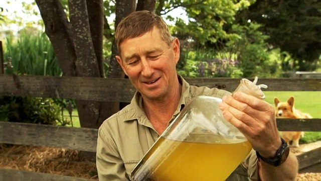 Tas. seaweed trial for livestock to eliminate emissions
