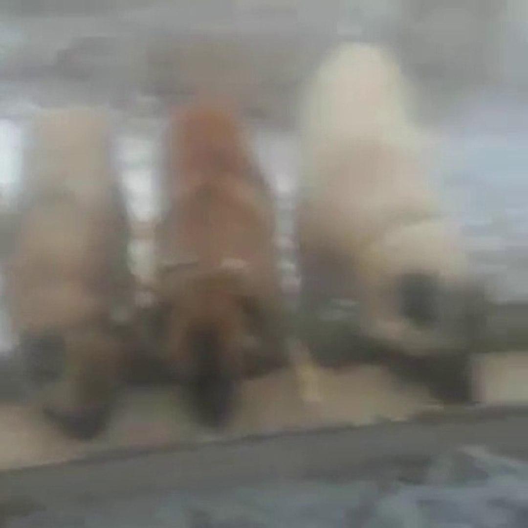 KANGALLAR GOREV DONUSU PUSLU HAVADA KAHVALTI - KANGAL SHEPHERD DOGS BREAKFAST