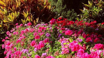 Beautiful Garden with Flowers | Non-Copyright | Free to Use