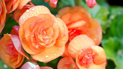 10 Flowers That Are Easy To Grow