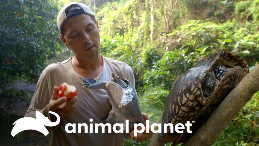 Frank se aproxima de 3 espécies incríveis de tartarugas   Wild Frank   Animal Planet Brasil