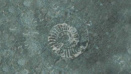 Ludovico Einaudi - Fossils