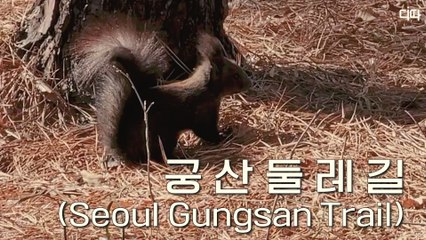 랜선여행 궁산둘레길(양천향교, 소악루, 양천고성지, 궁산땅굴)(Yangcheonhyanggyo, Soangnu, Yangcheongoseong Fortress Site, Gungsan Underground Tunnel) / 디따