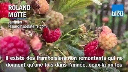 Roland Motte, jardinier : taillez vos framboisiers