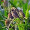 Save Nature Save Life ,  Save Birds