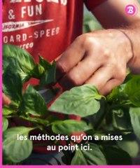 Nouveau Monde : l'agriculture biointensive