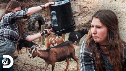 Clima de verão e seca intensa ameaçam os animais   A grande família do Alasca   Discovery Brasil