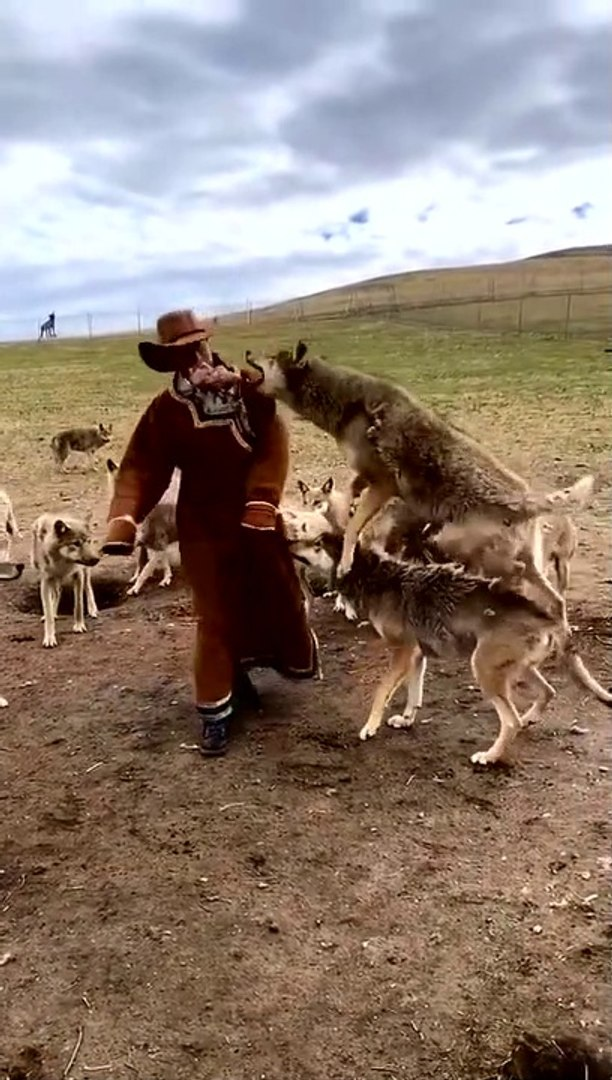 DAYI RESMEN KURT ADAM GiBi - WOLVES with DANCE