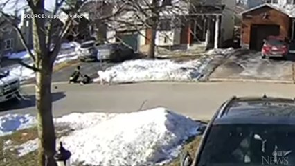 Family dog saves owner having a seizure by stopping traffic for help