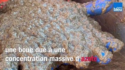 Le liga, pollution marine filmée par les pêcheurs basques