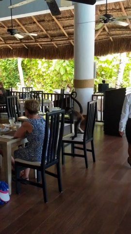 Monkey Walks Into Restaurant And Sits At the Table While Trying To Order Food