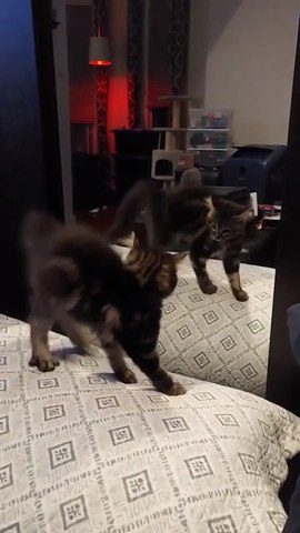Cat Sees Their Reflection On Mirror For First Time And Jumps Near It