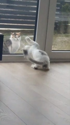 Pet Cat Tries to Catch Stray Cat From Other Side of Glass Door