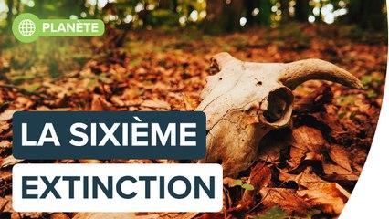 Interview : comprendre la sixième extinction, avec Isabelle Autissier   Futura