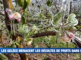 À la UNE : le froid d'avril menace les récoltes / L'excès d'affluence au centre de vaccination du CHU / Quels sont les sports autorisés pendant le confinement ? / Des balades personnalisées sur Loire-Forez. - Le JT - TL7, Télévision loire 7