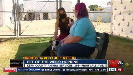 Pet of the Week - Hopkins