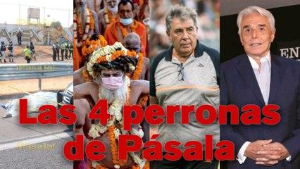 ¡AQUÍ ESTÁN LAS 4 PERRONAS DE PÁSALA!