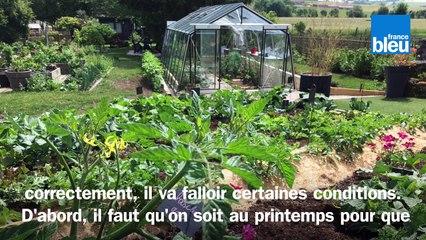 Roland Motte, jardinier : faites vous-même vos semis de tomates