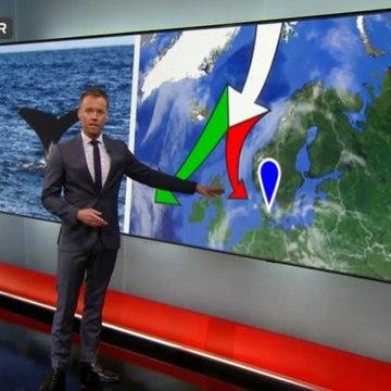 Vejlensere på hvaljagt | Kaskelothval | Vejle | 31-05-2016 | TV SYD @ TV2 Danmark