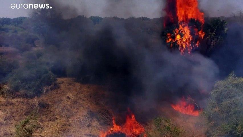 فيديو: نشطاء ينددون بتهديد العامل البشري لمحمية الدندر الطبيعية في السودان