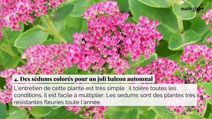6 plantes idéales pour un balcon fleuri toute l'année