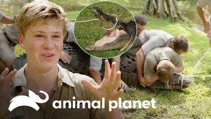 Encontros de Robert com crocodilos | A Família Irwin: Robert ao resgate | Animal Planet Brasil