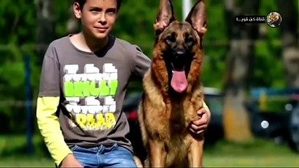 هذا هو أخطر وأقوى كلب في العالم !!! كن حذرا بشده اذا رأيته؟!!