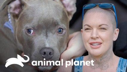Família adota um pitbull reabilitado por Amanda | Família ao Resgate | Animal Planet Brasil