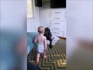 Ce bébé n'a pas peur du gros chien
