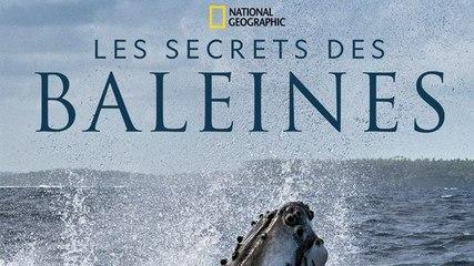 Les secrets des baleines : Le coup de coeur de Télé7