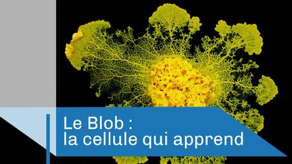 Le Blob, une cellule qui apprend | Reportage CNRS