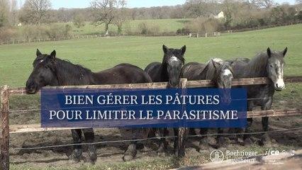 Bien gérer les pâtures pour limiter le parasitisme