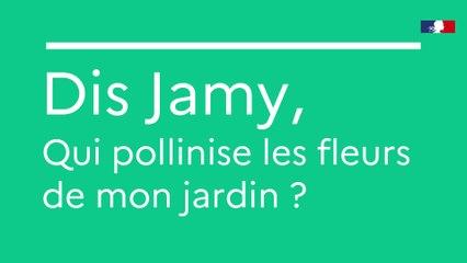 Dis Jamy, qui pollinise les fleurs ?