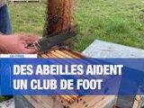 À la UNE : des élections à l'Université Jean-Monnet / La Covid19 a une incidence sur le chômage dans la Loire / Le festival Paroles et Musiques de nouveau annulé / Un apiculteur aide le club de foot local. - Le JT - TL7, Télévision loire 7