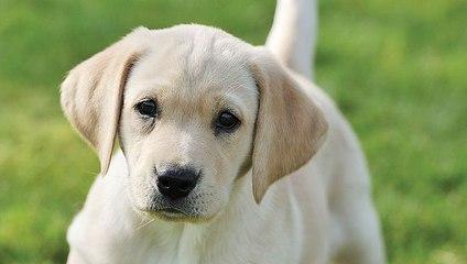 15 Cutest Dog Breeds